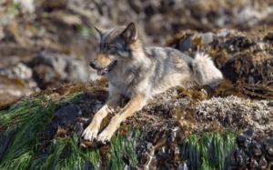 Sea Wolves: WPT Interpretive Walks